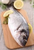 Sea bream Stock Image