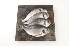 Sea Bream Royalty Free Stock Photo