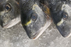 Sea bream Stock Photos