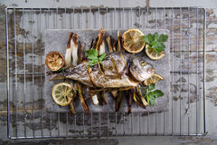 Sea bream baked in the oven Stock Image