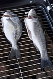 Sea bream and bass Stock Images