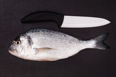 Sea bream with ceramic knife . Top view. Stock Images