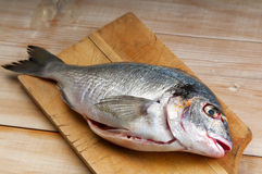 Sea bream on a chopping board Stock Photography