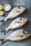 Sea bream dorada fish royalty free stock photo