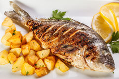 Sea bream fish Stock Photography