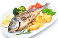 Sea bream fish Stock Images