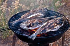 Sea Bream Fish Grilling On BBQ Royalty Free Stock Photos