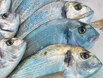 Sea-bream fish for sale on market Royalty Free Stock Photos