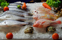 'sea bream' - fish - shop window Stock Photography
