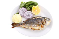 Sea bream. Fish in the studio environment photographed dishes, mashed potatoes, onion and lemon Stock Photography