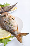 Sea Bream fish with vegetables Stock Photography