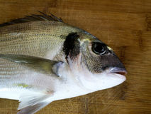 Sea bream fish on wooden board Stock Images
