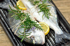 Sea bream fishes Stock Photos