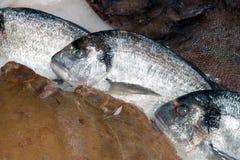 Sea Bream On Fishmonger`s Slab royalty free stock photo