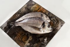 Sea Bream Stock Photography