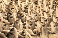 Sea Bream Stock Images