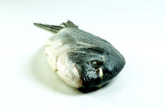 Sea bream from greece Royalty Free Stock Photography