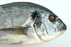 Sea bream from greece Royalty Free Stock Photo