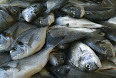 Sea bream head in the market Stock Image