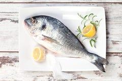 Sea bream with lemon on white tray. Royalty Free Stock Photos