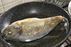 Sea bream in pan Stock Photography