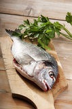 Sea bream with parseley Royalty Free Stock Photo