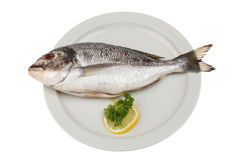 Sea bream on a plate Royalty Free Stock Photos