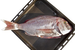 A Sea bream  ready for the oven, Stock Photography