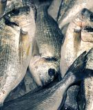 Sea bream on sale in the fish market Stock Photos