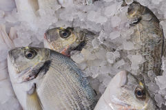 Sea Bream for sale. At the local market Royalty Free Stock Photos