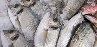 Sea Bream for sale. At the local market Royalty Free Stock Image