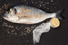 Sea bream with sea salt and lemon. Royalty Free Stock Image