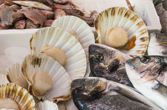 Sea bream and sea scallops. On sale at the local market Royalty Free Stock Images