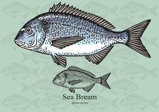 Sea bream Royalty Free Stock Photos