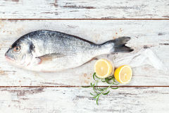Sea bream on white wooden background. Royalty Free Stock Image