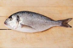 Sea bream on wooden kitchen board. Gilthead bream fish isolated on brown wooden kitchen board. Culinary seafood concept Stock Photo