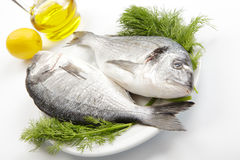 Sea breams. Raw sea breams with dill, lemon and olive oil royalty free stock photography