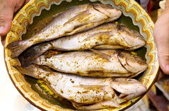 Sea breams fish on plate stock photography