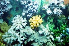 Sea bright corals Royalty Free Stock Photos