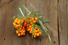 Sea buck thorn berries, Hippophae rhamnoides, on wooden board. Brown table in rustic style with common  sea  buckthorn Royalty Free Stock Image