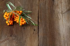 Sea buck thorn berries, Hippophae rhamnoides, on wooden board. Brown table in rustic style with common  sea  buckthorn Royalty Free Stock Images