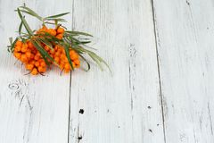 Sea buck thorn berries, Hippophae rhamnoides, on wooden board. White table in provence style with common  sea  buckthorn Stock Photo