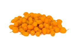 Sea-buckthorn. Pile of sea buckthorn berries isolated on the white background Royalty Free Stock Image