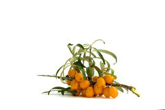 Sea-buckthorn. With fruits branch isolated over white Stock Photography