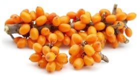 Sea-buckthorn berries Royalty Free Stock Photos
