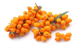 Sea-buckthorn berries Royalty Free Stock Photography