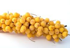 Sea-buckthorn berries Stock Image