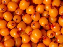 Sea buckthorn berries. Background of sea buckthorn berries Royalty Free Stock Image