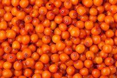 Sea buckthorn berries background Stock Photography