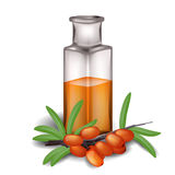 Sea buckthorn berries and bottle of oil Stock Image